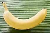 One banana on leaf
