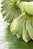 Bananenstaude mit Wassertropfen