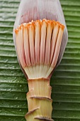 Banana flower (overhead view)