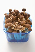 Pioppini mushrooms from Italy in plastic punnet