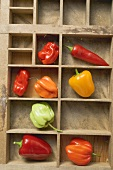 Various peppers and chillies in type case