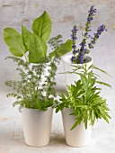 Assorted herbs in beakers