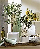 Olive trees (Mediterranean interior decoration)