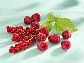 Redcurrants, raspberries and raspberry leaf