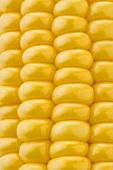 Corn on the cob (detail)
