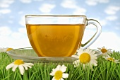 Cup of chamomile tea on grass with chamomile flowers