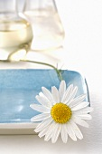 Chamomile flower on blue dish (close-up)
