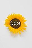 Sonnenblume mit Schriftzug SUN aus Sonnenblumenkernen