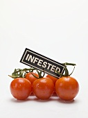 Cherry tomatoes with an 'INFESTED' label