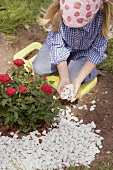 Little girl putting pebbles around rose bush