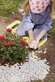 Little girl putting pebbles around rose bush