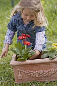 Little girl planting flowers in terracotta planter