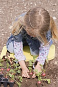 Little girl planting radishes in the ground