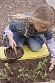 Little girl scattering pelleted manure around radish plants