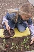 Little girl scattering pelleted manure around radish plants