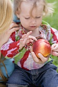 Little girl looking at nectarine in mother's hand
