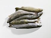 Several frozen trout