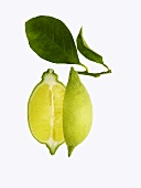 Lemon, halved, with leaves