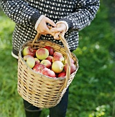Woman carrying a basket of apples