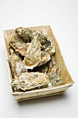 Fresh oysters in woodchip basket