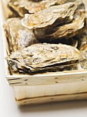 Fresh oysters in woodchip basket (detail)