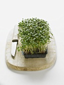 Cress in a plastic tray