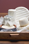 Various soft cheeses and goat's cheese