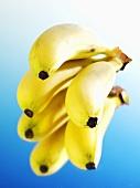Bananenstaude mit Reflexion