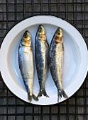Drei frische Sardinen auf Teller von oben