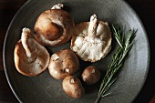Shiitake Mushrooms with Rosemary Sprig