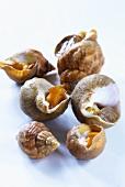 Several fresh sea snails