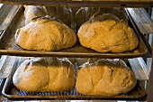 Handmade Loaves of Bread on Baking Trays