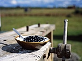 Sour milk with blueberries on work table out of doors