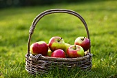 Basket of fresh apples in grass