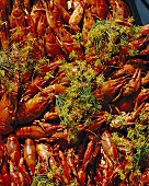 Crayfish on a market stall
