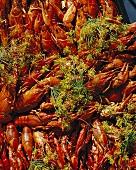 Crayfish on a market stall