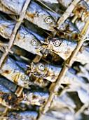 Dried fish at a market (close-up)
