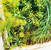 Fresh dill in basket (close-up)