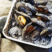 Grilled mussels on disposable barbecue