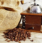 Coffee beans, old coffee mill and jute sack