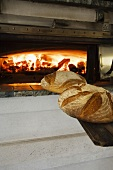 Freshly baked bread out of a wood fired oven