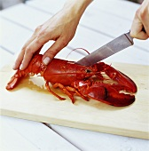 Hand cutting up a cooked lobster with a knife