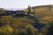 La Morandina Winery, Piedmont, Italy