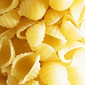 Conchiglie (pasta shells)