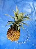 A baby pineapple in water