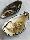 Opened oyster on marble