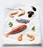 Rotbarbe, Sardellen, Miesmuscheln und Garnelen auf Papier