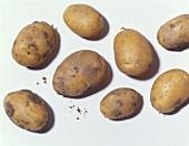 Acht Kartoffeln