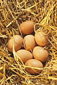 Seven brown eggs in straw