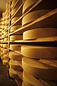 Wheels of cheese in a ripening cellar (Vorarlberg mountain cheese)
